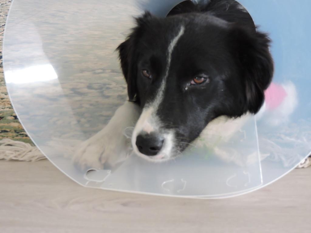 Ella, still groggy from her operation